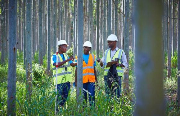 Forestry South Africa (FSA) launches online recreational map